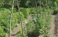 10x10m² Selbstversorgergarten,