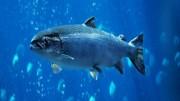 Das Universum der Fische – Doku