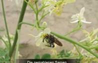Plan Verde e.V.  – Moringa – Naturwunder