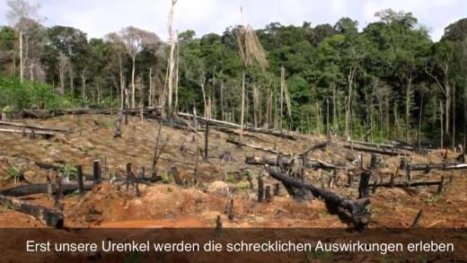 Regenwald Projekt 2013