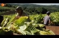 Monsanto auf Deutsch – Seilschaften deutscher Gentechikbetreiber