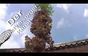 Salatbaum, die Alternative zum Garten