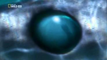 Die Bucht der weißen Haie – Doku
