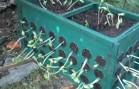 Garden in a Box!