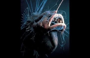 Geschöpfe der Tiefsee – Doku