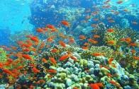 Korallenriffe – Die Regenwälder der Meere – Doku