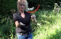 Kräuterlehrgang: Die Schafgarbe – Achillea millefolium