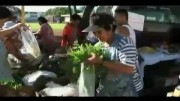 Moringa's Health Benefits