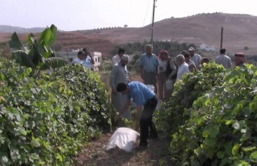 Permaculture Greening the Desert