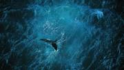 Planet Ocean [DE] – der Film