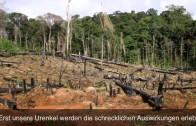 Der Regenwald – Der letzte Schatz