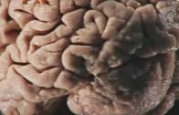 Synaptische Plastizität – wie Synapsen funken